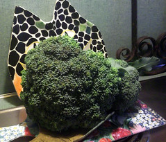 10 NOV Who could resist a giant local organic broccoli for 4 bucks (kjd_suka) Tags: broccoli wonderwoman rosemary scar hernia prickle steristrips