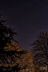 Where The Trees Meet The Skies (olismee) Tags: trees sky night dark stars
