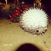 Sam photographer (سامر اللسل) Tags: me rose follow jeddah followme البحرين منصوري عمان تصويري جدة الباحه مصور الطائف فوتوغرافي الجنوب {flickrandroidapp}:{filter}=none {vision}:{outdoor}=0887 {vision}:{text}=0561