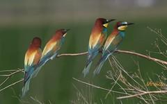 L'ARC EN CIEL, promesse des beaux jours à venir .... (6franc6) Tags: 30 signature explore gard 2012 6franc6