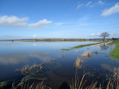 Nythe Road/Beer Drove, Somerset (ricksphotos101) Tags: river flooding flood somerset drain kings moor levels sedge 2014 nytheroad beerdrove