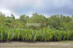 View of the Sundarbans, a UNESCO World Heritage Site and a wildlife sanctuary. (Bengal Pix Limited) Tags: voyage trip travel trees plants color colour tree green heritage tourism nature water ecology beauty horizontal fauna forest woodland landscape asian outside countryside flora scenery asia day asians tour view natural outdoor scenic environmental landmark unesco mangrove vegetation destination environment daytime aquatic naturalbeauty bangladesh naturalworld developingcountry developingcountries wetland imagery worldheritage ecosystem southasia thirdworld worldtravel southasian bangladeshi developingworld subcontinent khulna touristpoint southasians bangladeshis scenicbeauty mangroveforest environmentalissues bagerhat majorityworld sundarbans sundarban sundarbon chandpai