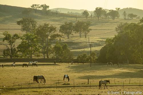 Garrawilla grasslands