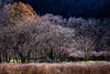 Plum trees (Pai Shih) Tags: trees mountain nature landscape spring taiwan getty 武陵農場 plumtrees nikond810