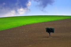 Alone (luporosso) Tags: trees italy naturaleza tree nature colors alberi landscape landscapes nikon italia country natura hills campagna colori paesaggi marche paesaggio colline scorcio naturalmente scorci luporosso nikond300s
