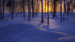 cold morning (Sergey S Ponomarev) Tags: park morning trees winter snow cold ice nature sunrise canon garden eos dawn frost russia north frosty natura freeze neve birch february inverno hdr nord russie  wintry kirov 2015 russland       600d vyatka invernale    ef24105l   sergeyponomarev viatka