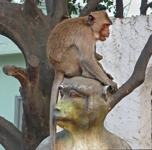monkey on a monkey
