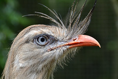Brsil 2014 (marine.cluzel) Tags: oiseau brsil