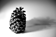 (52) pine cone (NeilPas) Tags: pinecone day52 day52365 365the2015edition 3652015 21feb15