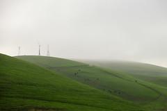 Altamont (bior) Tags: california fog hills windfarm altamont windturbines altamontpass altamontwindfarm