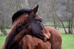 Lucius de Manolo (Laura_Photographie) Tags: wild horse cheval libert foal poulain ibrique lusitanien