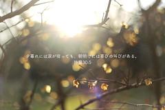30:5 (keikotakahashi) Tags: light sunset nature bible