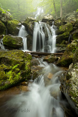 Dark Hollow Falls, Shenandoah National Park (Jim Fields Photography) Tags: water landscape waterfall stream waterfalls serene streams streambed naturephotography waterflow shenandoahnationalpark mountainstream darkhollowfalls landscapephotography springlandscape springstream jimfieldsphotography