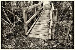 Day #3031 (cazphoto.co.uk) Tags: bridge monochrome sepia lumix mono wooden panasonic hertfordshire trolls shenley project366 rabley 180416 dmcgh3 panasonic1235mmf28lumixgxvarioasphpowerois beyond2922