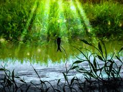Leaf & Bird-After The Rain-0380 (Rajjib's Photo) Tags: nature water grass birds illustration leaf fineart digitalart rays