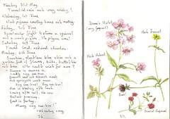 Summer is icumen in.   EXPLORED (Hornbeam Arts) Tags: herbs sketchbook watercolour wildflowers artpainting
