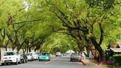 The Great VitalityNantou, Taiwan  (rightway20150101) Tags: boulevard taiwan   nantou