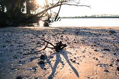 Paisajes del Guadalquivir (maria_140505) Tags: sol rio sevilla guadalquivir nikon sombra andalucia arena tronco