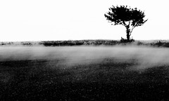 Clouds in the making ... (heidiblanksma) Tags: tree fields mist evaporation lumix moody clouds
