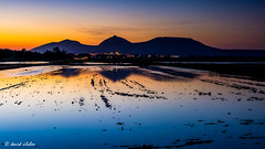 from the rice paddies of Pals (vilchesdavid) Tags: blue sunset mountains reflection water azul agua pals puestadesol reflejos montaas empord baixempord torroellademontgr arrozales montgr