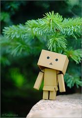 Under a fir-tree... (tehhyvredina) Tags: macro bokeh firtree boxy danbo    canonef100mmf28usmmacro canonef100mmmacro revoltech   apothecarygarden danboard fujifilmxe1