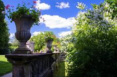 summer feeling (Goddl) Tags: park flowers blue light summer sky nature grass clouds licht nikon outdoor sommer exploring himmel wolken blumen gras blau landschaft parkland naturemasterclass