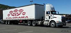 Peterbilt (AZ Ashman 88) Tags: transport semi pete trucking peterbilt 18wheeler tractortrailer bigrig prescottarizona colorama paccar