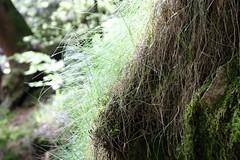 Midsummer grass (tillwe) Tags: green blackforest tillwe allerheiligen oppenau 201605 norschwarzwald hochzeitsfeierjd