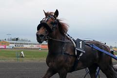 IMG_2382 (lovelymelancholy) Tags: horses horse hevoset hevonen horseraces ravit imrautio ravihevonen oulunravirata