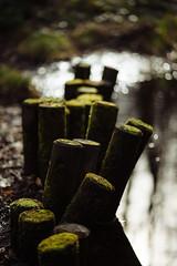 shiny stump (marcuslange) Tags: zeiss shiny bokeh saxony sachsen stump botanicalgarden chemnitz eos5d planar10020ze bokehmycafe