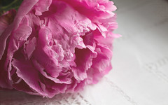 Pink (Deborah S-C (InTheFairyGarden)) Tags: pink 6 flower texture floral fleur one petals flora lace peony single klassen cerise textured frilly peonyrose 6one june2016 bestill52oneyearwisermonth itemmonth thingkim