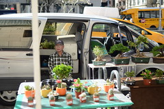 Wanna buy a cactus? (Dexter Waverman) Tags: new york city nyc west nikon side photojournalism upper dslr