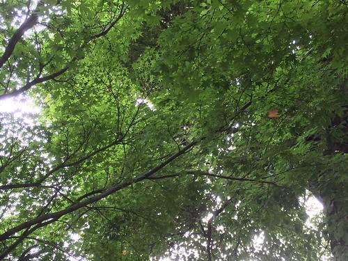 雨あがりの緑