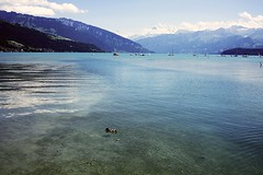 Thunersee (renalt130) Tags: thunersee lake switzerland suisse duck eend blue