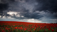 Storm over the Poppy Field (explored 19/06/16) (Andy Parslow) Tags: sky cloud storm field landscape outdoor poppy drama