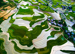 Terraced rice field in Vietnam from above (Meogia Photography) Tags: water field season rice farm vietnam agriculture nam thang drone terraced bc ty rung bc vit ma nc