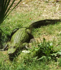 DSCF0338 (Stonehenge 68) Tags: zoo birmingham snake alabama lizard plantation antebellum birminghamzoo arlingtonhouse