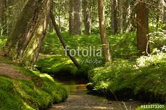 Waldidyll (vivalatinoamerica) Tags: wasser sommer natur bach grn wald schwarzwald baum freizeit moos erholung ruhe gewsser fotolia