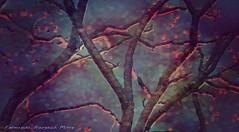 mistico ser (ojoadicto) Tags: digitalmanipulation artisticphotography intervenciondigital troncos arboles trees texture textura