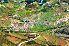 Rice Terrace Landscape Between Hau Thoa and Sapa (Rob Kroenert) Tags: green landscape asia pattern rice terrace north vietnam pa viet sa van southeast northern ta lao chai sapa nam hau thoa