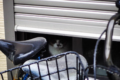 Today's Cat@2016-06-23 (masatsu) Tags: cat pentax mx1 thebiggestgroupwithonlycats