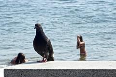 Bath time! (joaocarloo) Tags: kids pigeons