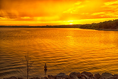 Duck (Kansas Poetry (Patrick)) Tags: sunset lake golden duck kansas lawrencekansas lawrenceks clintonlake patrickemerson patricklovesnancy