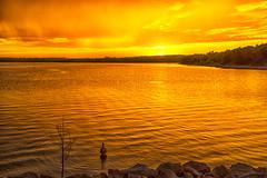 Duck (Kansas Poetry (Patrick)) Tags: sunset lake golden duck kansas lawrencekansas lawrenceks clintonlake patrickemerson patricklovesnancy