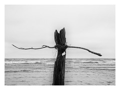 (eduardo.mazzeo) Tags: beach winter playa invierno blanconegro bw monocromo monochrome solitude