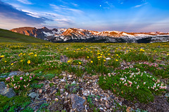 Iceberg Pass Sunrise (Bryce Bradford) Tags: road park mountain sunrise landscape colorado fuji buttercup dwarf rocky ridge trail alpine national wildflowers rmnp clover f28 tundra 10mm xe1 rokinon