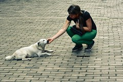 Dog and tour guide (tmo222) Tags: street dog stone candid havana cobblestone oldtown