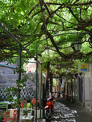 Wisteria Covered Street, Molyvos Greece (irecyclart) Tags: travel tree wisteria