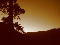 Yosemite Pine Sunset (achyalien) Tags: photography photographer photos pics artisticphotography naturephotography actionphotography landscapephotography abstractphotography surrealphotography mobilephotography astronomyphotography digitalcameraphotography psdphotography achyalien achyalienflickr achyalienco dslrcameraphotography jacobaa