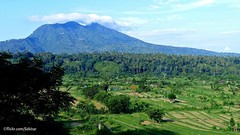 Gunung Seraya with ricefields, Karangasem Bali (Sekitar) Tags: indonesia bali asia pulau island gunung seraya ricefields karangasem pem pemandangan landscape ricefield sawa sawah subur fertile earthasia